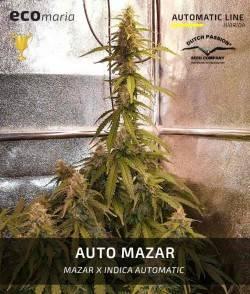 Auto Mazar -...