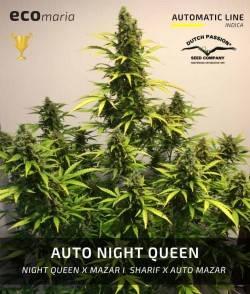Auto Night Queen - Semilla...