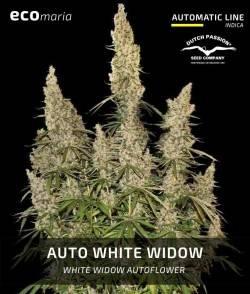 Auto White Widow -...