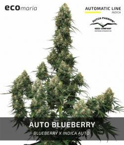 Auto Blueberry - Automática...