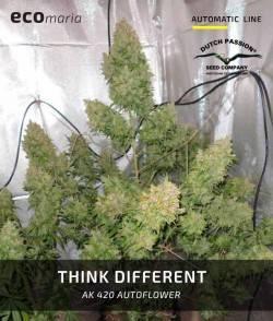 Think Different - Semillas...
