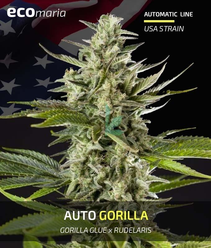 Imagen principal del producto Auto Gorilla