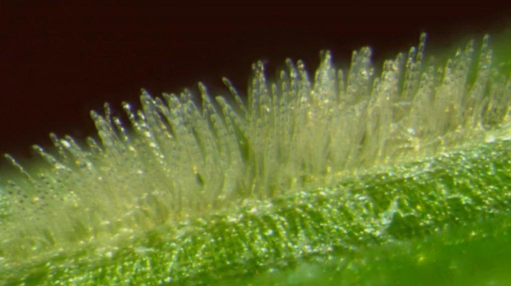 Biotecnología E.M. - Definición, beneficios y ejemplos | Ecomaria